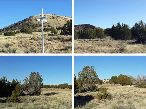Treed 1.1 Ac Camping Or Building : Concho : Apache County : Arizona
