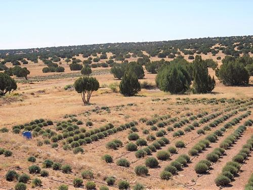 Spectacular 20 Ac Heber-Overgaard : Heber-Overgaard : Navajo County : Arizona