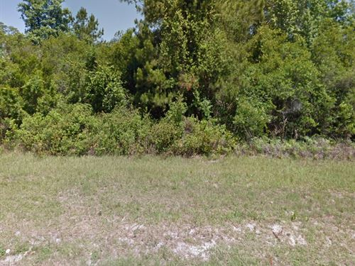 Alachua Cnty, 8.74 Acres 120K, Neg : Gainesville : Alachua County : Florida