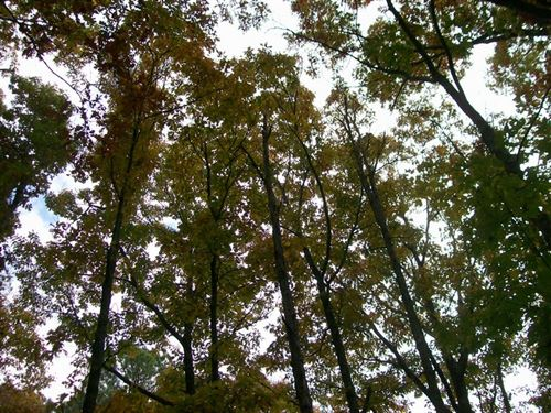 6.75 Wooded Acres Residential/Farm : Pikeville : Bledsoe County : Tennessee