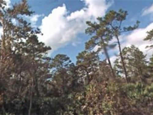 Volusia Co, 1.25 Aces 350K Neg : Oak Hill : Volusia County : Florida