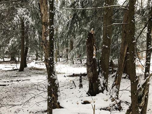 Southern Adirondack Camp Spot : Salisbury Center : Herkimer County : New York