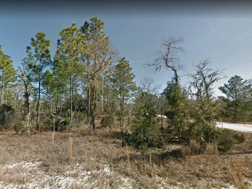 Levy County, Fl $6,000 : Williston : Levy County : Florida