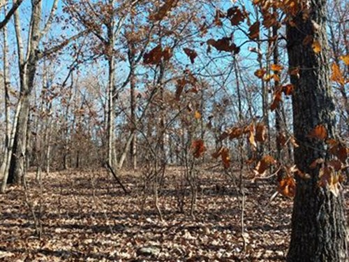 Huge Hardwood Homesite : Thomaston : Upson County : Georgia