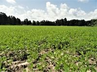 Saint George Minifarm : Saint George : Dorchester County : South Carolina