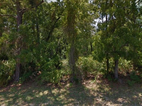 Citrus Co, Fl .28 Ac 34K Neg : Homosassa : Citrus County : Florida