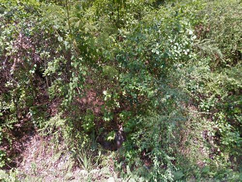 Leon Co, Fl .247 Ac, 24.999 Neg : Tallahassee : Leon County : Florida