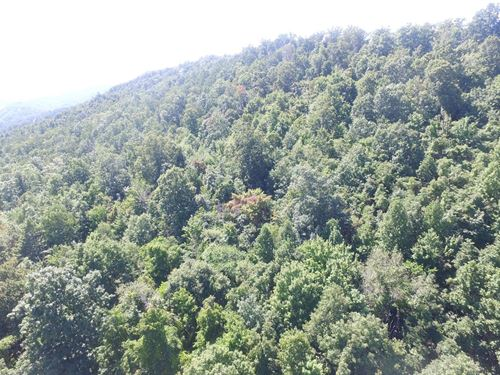 Tennessee Mountain Lot Lone : New Tazewell : Claiborne County : Tennessee