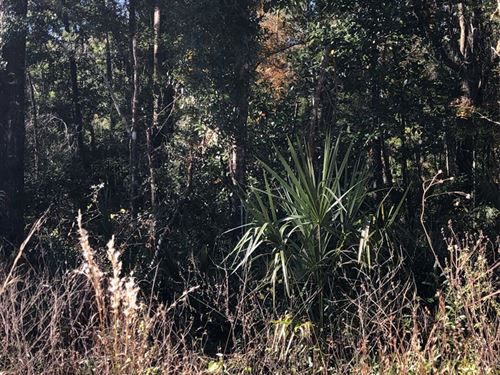 Beautiful 5 Acre Tract 776871 : Old Town : Dixie County : Florida