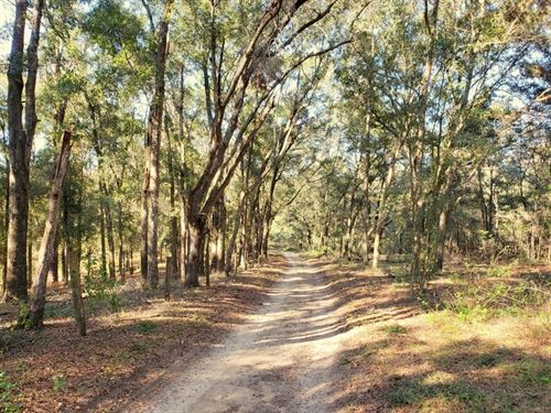 3 Acres In Citra For Only $19,900 : Citra : Marion County : Florida