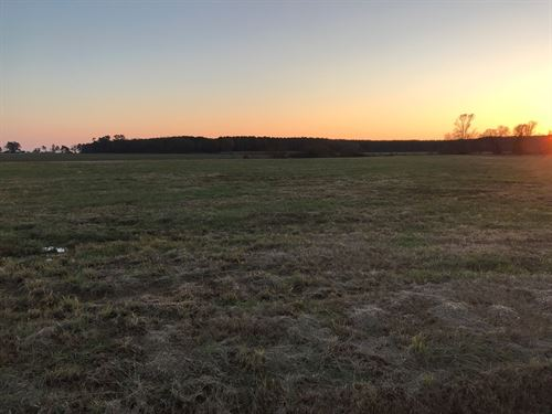 4.33 Acre Lot-Hertford, NC : Hertford : Perquimans County : North Carolina