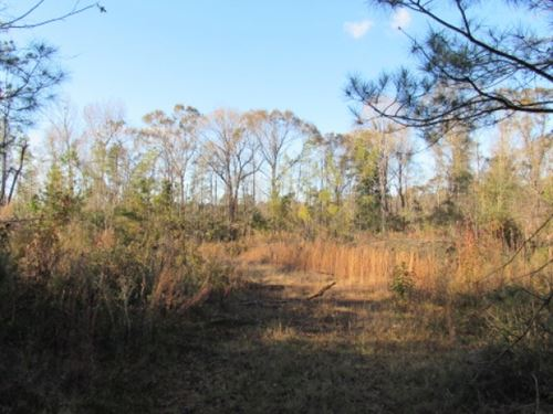 16 Acres, West Side Of Garner Rd : Summit : Pike County : Mississippi