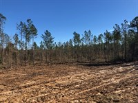 6.39 Acres In Npsd : Summit : Pike County : Mississippi
