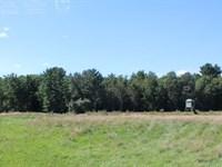 Lot Walking Distance To Black River : Neillsville : Clark County : Wisconsin