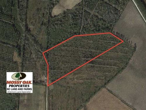 20 Acres of Hunting And Timber Lan : Tabor City : Columbus County : North Carolina