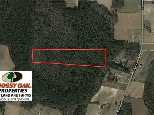 Reduced, 17.62 Acres of Timber an : Fair Bluff : Columbus County : North Carolina
