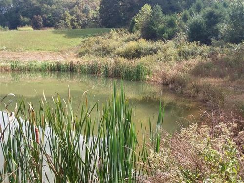 , Has A Huge Pond : Sneedville : Hancock County : Tennessee