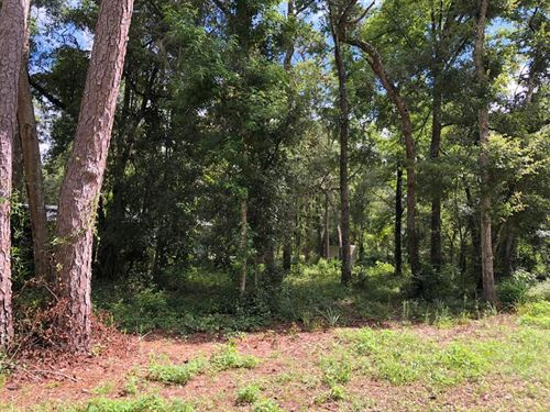 Just Reduced .25 Acre Lot : Old Town : Dixie County : Florida