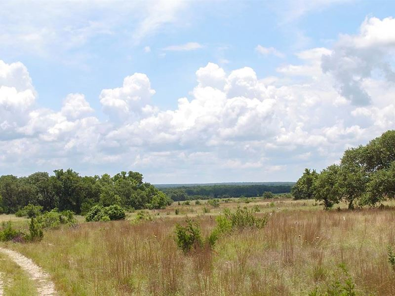 Prime Hill Country Acreage : Burnet : Burnet County : Texas