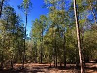 Remote Small Hunting Tract : Tennille : Washington County : Georgia