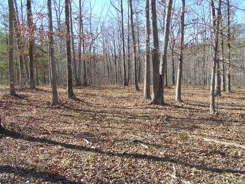 Woods, Water, Power And More Acres : Dunlap : Sequatchie County : Tennessee