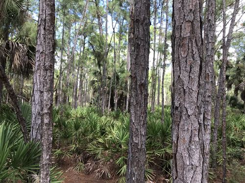 Off Grid Compound Or Investment : North Port : Sarasota County : Florida