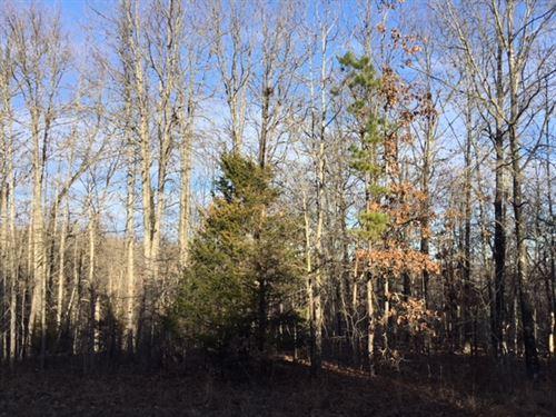 Hunting Land For Sale In Missouri : Hartshorn : Texas County : Missouri