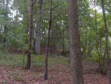 Beatiful Unrestricted 2.2 Acre Lot : Montgomery : Montgomery County : Alabama