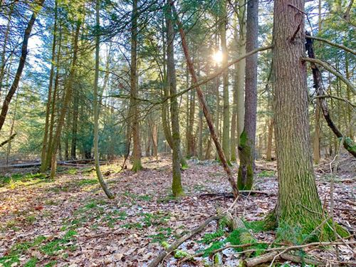 10.5 Acres Land : Millville : Columbia County : Pennsylvania
