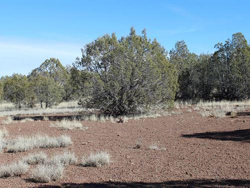 Great Recreation, Land Close to : Williams : Coconino County : Arizona