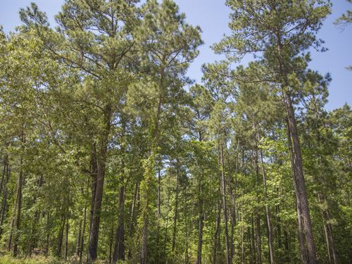 8.1 Ac Wilderness Estates Tr 4-6 : Point Blank : San Jacinto County : Texas