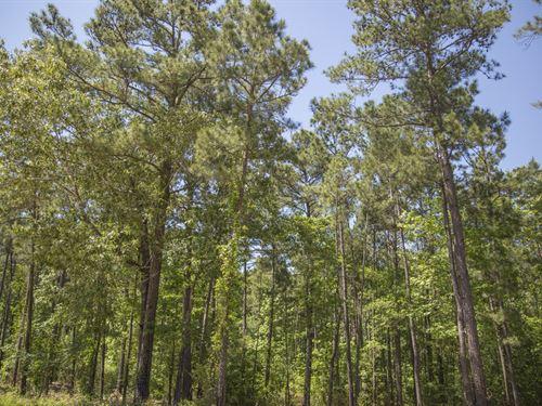 4.5 Ac Wilderness Estates Tr 5-10 : Point Blank : San Jacinto County : Texas