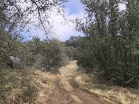 Rural Residential Land For Auction : Squaw Valley : Fresno County : California