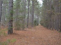 18 Wooded Acres In Laurens Coun : Ware Shoals : Laurens County : South Carolina