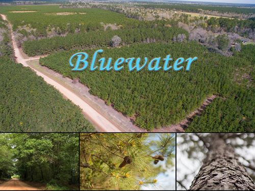 12 Acres Bluewater T3-4 : Livingston : Polk County : Texas