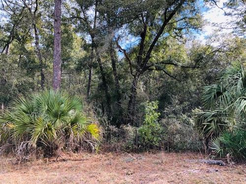 1 Acre Lot Homes Only S/D 777187 : Chiefland : Levy County : Florida