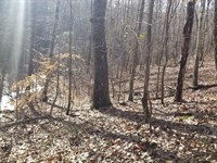 12.7 Acres Nice Wooded With Creek : South Pittsburg : Marion County : Tennessee