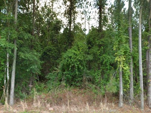 Camp/Investment In Flagler Estates : Bunnell : Flagler County : Florida