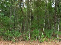 Flagler Estates Camping Getaway : Bunnell : Flagler County : Florida