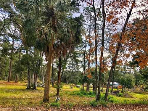 Steinhatchee Florida Land, Dixie : Steinhatchee : Dixie County : Florida