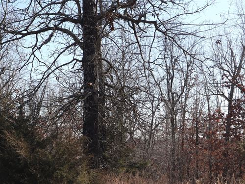Ozarks Wooded Development Property : Salem : Fulton County : Arkansas