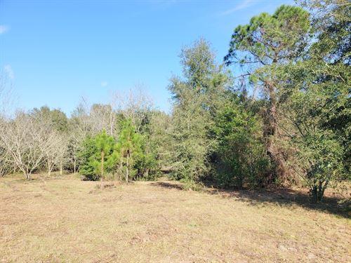 Crosby Plat .84 Acre : Citra : Marion County : Florida