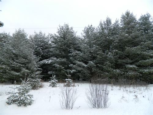 Buildable Lot Access to Spring Fed : Exeland : Sawyer County : Wisconsin