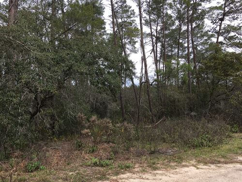 Beautiful Secluded Minifarm : Dunnellon : Citrus County : Florida