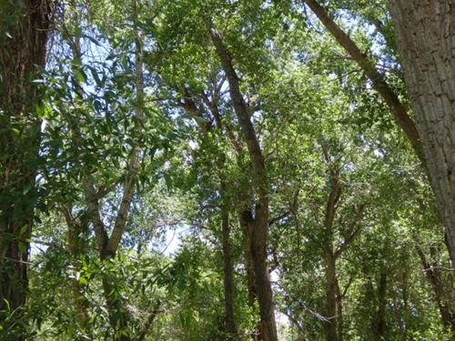 67002473-Gorgeous Lot And Unusual : Poncha Springs : Chaffee County : Colorado