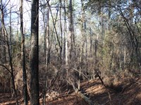 A Nature Lover's Paradise : Little Texas : Macon County : Alabama