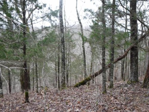 5+ Acres, Mtn Views In Private Area : Celina : Clay County : Tennessee