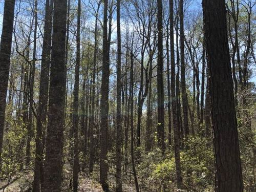 Beautiful Tract : Poplarville : Pearl River County : Mississippi