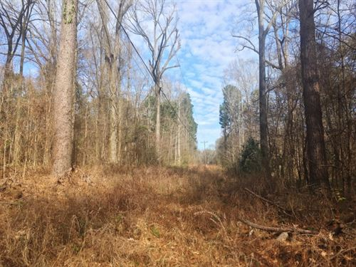18 Acre Hardwood Land Tract For Sal : Woodville : Wilkinson County : Mississippi