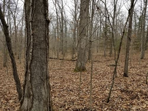 Land Rae Valley With Big Oak Trees : Flippin : Marion County : Arkansas